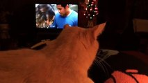 Cat Watching HAWAII FIVE-0 On CBS