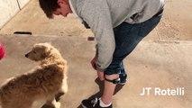 Il teste un collier électrique pour chien anti aboiement !