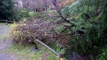 Viento, árbol derribado y fuerte oleaje: Efectos del temporal Bruno en Candás, Asturias