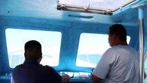 Nager avec des requins-baleines: au Mexique, c'est possible !
