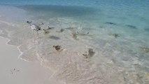 Des dizaines de petits requins essaient d'attraper un oiseau sur la plage aux Maldives