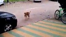 Dog dance - danse de chien