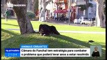 Problema dos Animais Abandonados no Funchal