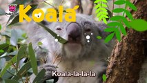 Koala Lalala _ Koala _ Animal Songs _ Pinkfong So