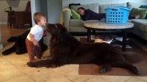 Le bébé s'apprête à faire un bisou au chien, mais regardez sa réaction