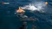 Lors d'un tournage un présentateur TV se fait mordre par un requin.