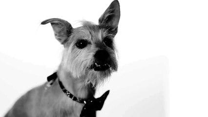 How Dogs Share the Love | Subaru