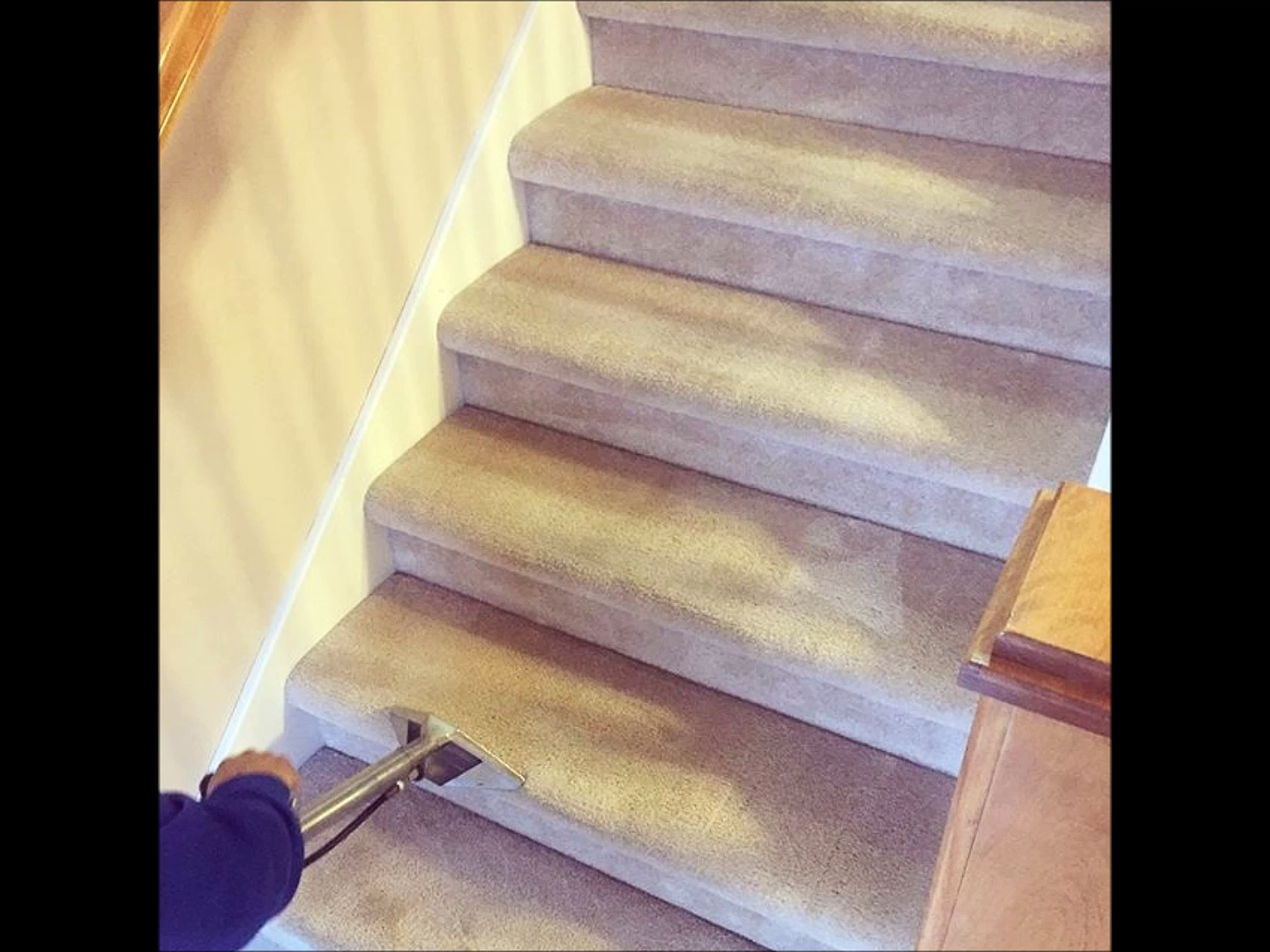 Professional Carpet Cleaning by Emma Cleaning