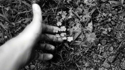 Charlotte Gainsbourg - Les Oxalis