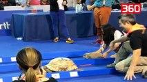 Gara në jetën reale ndërmjet breshkës dhe lepurit, shikoni kush del fitimtar (360video)
