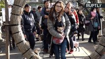Japanese Visit Shinto Shrine for Blessings to Protect Their Pooch for Year of the Dog