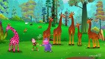 Finger Family Giraffe _ ChuChu TV Animal Finger Family Nursery Rhymes Songs For Children-