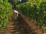 Γλυκόξινο κρασί E01