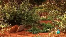 AFRICA  ANIMALES RAROS 3,DOCUMENTALES DE ANIMALES,ANIMALES SALVAJES,ANIMALS,ANIMALES FANTASTICOS
