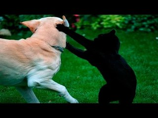 Funny Cats And Dogs - Funny Cats vs Dogs - Funny Animals - Funny Video