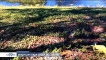 Etats-Unis : Le grand froid qui touche même la Floride fait des victimes chez les animaux comme les iguanes !