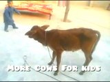 More Cows For kids: A cow video for children who like little cow Released the little cow and this happened Part 1