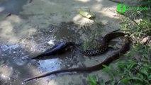 Est-ce le poisson qui mange le serpent ou le serpent qui mange le poisson ???