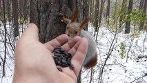 Ces oiseaux et écureuils lui mangent dans la main en pleine nature !
