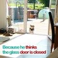 Ce chien idiot attend qu'on lui ouvre la porte... qui est déjà ouverte