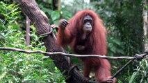 Le zoo de Singapour met ses bébés animaux à l'honneur