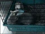 Baston de rats