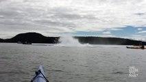 Quand une baleine fait surface et saute tout pres de kayak en mer