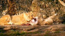 Lions Lunch