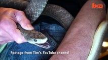 Immunisé au venin de serpent, cet homme se laisse mordre par un serpent très venimeux