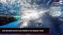 Une baleine protège une femme d'un requin tigre, les images impressionnantes (Vidéo)