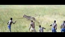 Amazing African Animals - Elephant Kills African Buffalo Wils Animals Fight To Death