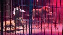 Cirque: le recours aux animaux sauvages fait débat