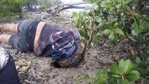 Il disparait dans un trou pour aller attraper un crabe géant...