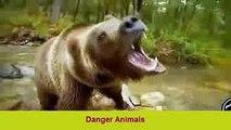 ✪ Amazing Wild Animal Attacks 4 -lion- tiger- Crocodile -deer-anaconda✔animal fights ✔Danger Animals
