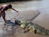 Voici Tyson, le plus gros et plus vieux crocodile du Costa Ricas