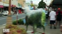 """""""Cash Investigation"""" : en Nouvelle-Zélande, il y a deux fois plus de vaches laitières que d'habitants"""
