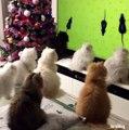 Tout ces chats essaient de chasser des souris sur un écran
