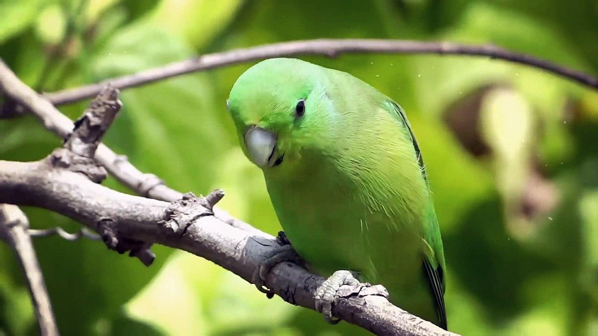 Beautiful Wildlife videos - World Beautiful Birds And Animal