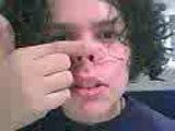 spider cochon spider cochon