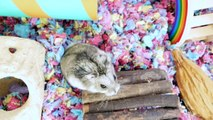ON CONSTRUIT HAMSTERLAND ! - PARC DATTRACTION POUR HAMSTER