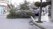 """""""Τρελός"""" αέρας στη Βοιωτία. Πτώση δέντρου στο κέντρο του Ορχομενού"""
