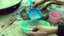 Great Idea to Make Bonsai Pots With Legs / Make Own Cemented Bonsai Pots /In Hindi // Mammal Bonsai