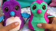 Hatchimals Nederlands: Hatchimals Baby verzorgen en verschillen tussen een Draggle en een Penguala