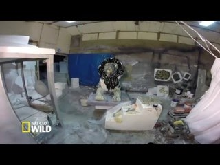 The Making Of the Lion Unveiled in Trafalgar Square (Nat Geo WILD)