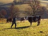 Reportage Cant'Avey'Lot : le pari réussi de 30 éleveurs laitiers du Sud-Ouest