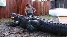 Assis tranquillement à coté du plus gros crocodile du monde... Impressionnant