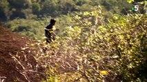 Des enfants capturent des mygales pour les manger / Children capture mygales to eat them