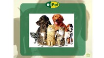 e-Pet Chip: Um novo conceito em identificação animal.