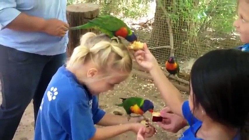 Funny Bird Videos Weekly Compilation 2017 | Funny Pet Videos