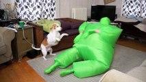 Dog Dances w/Man in Chub Suit: Funny Dog Maymo